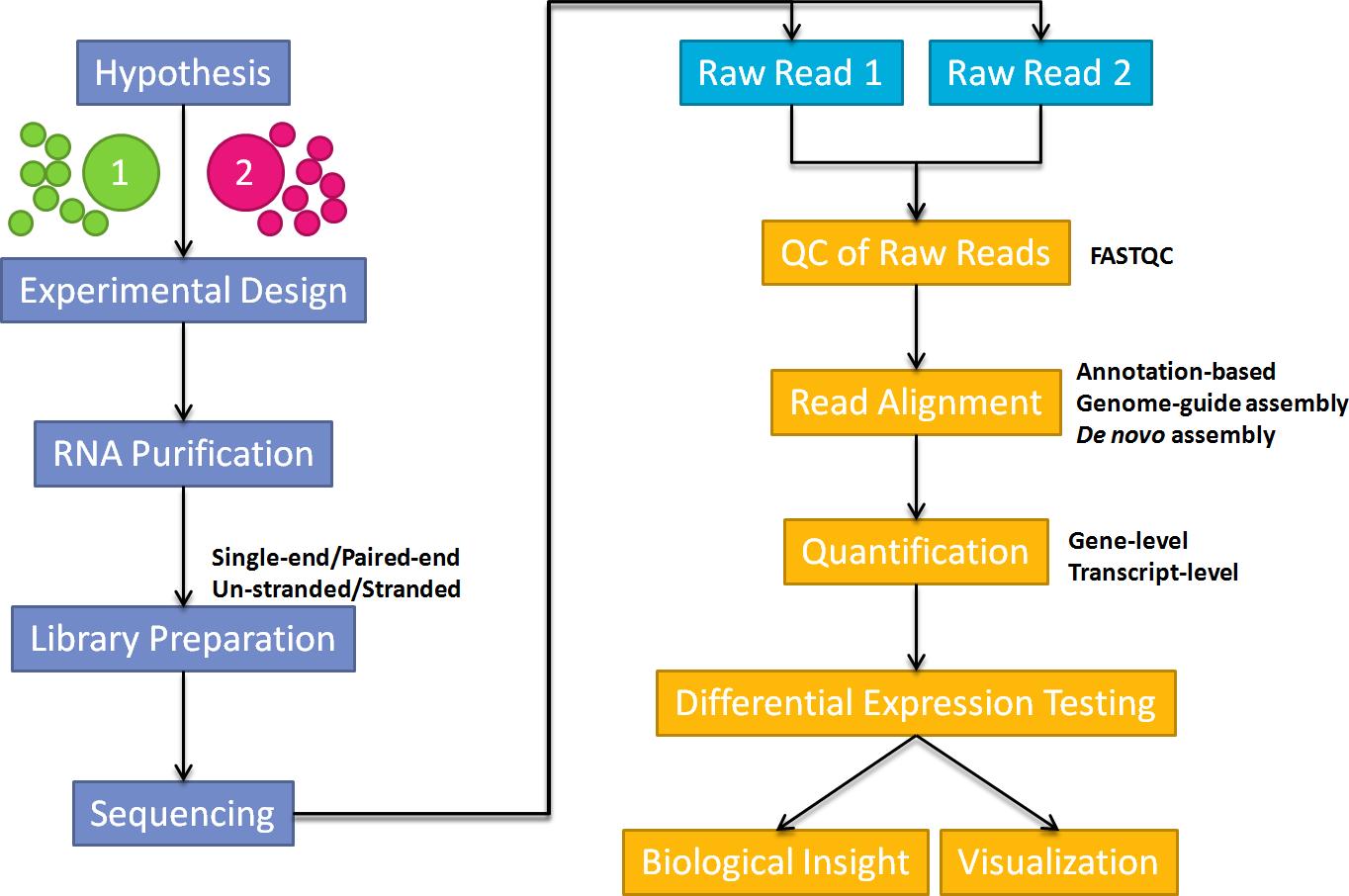 RNA-seq data analysis | http://databeauty com